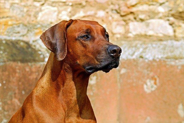 assurance pour les chiens de chasse