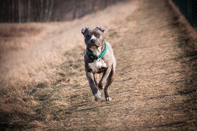 une assurance pour chien de catégorie 2